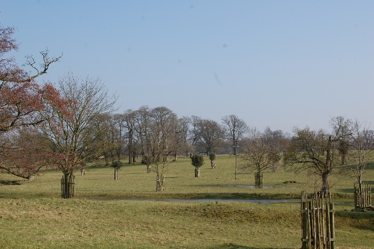 Figure 5: Views across from Well Lane westwards over Badminton Deer Park